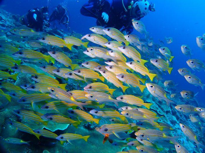 魚の群れ観察